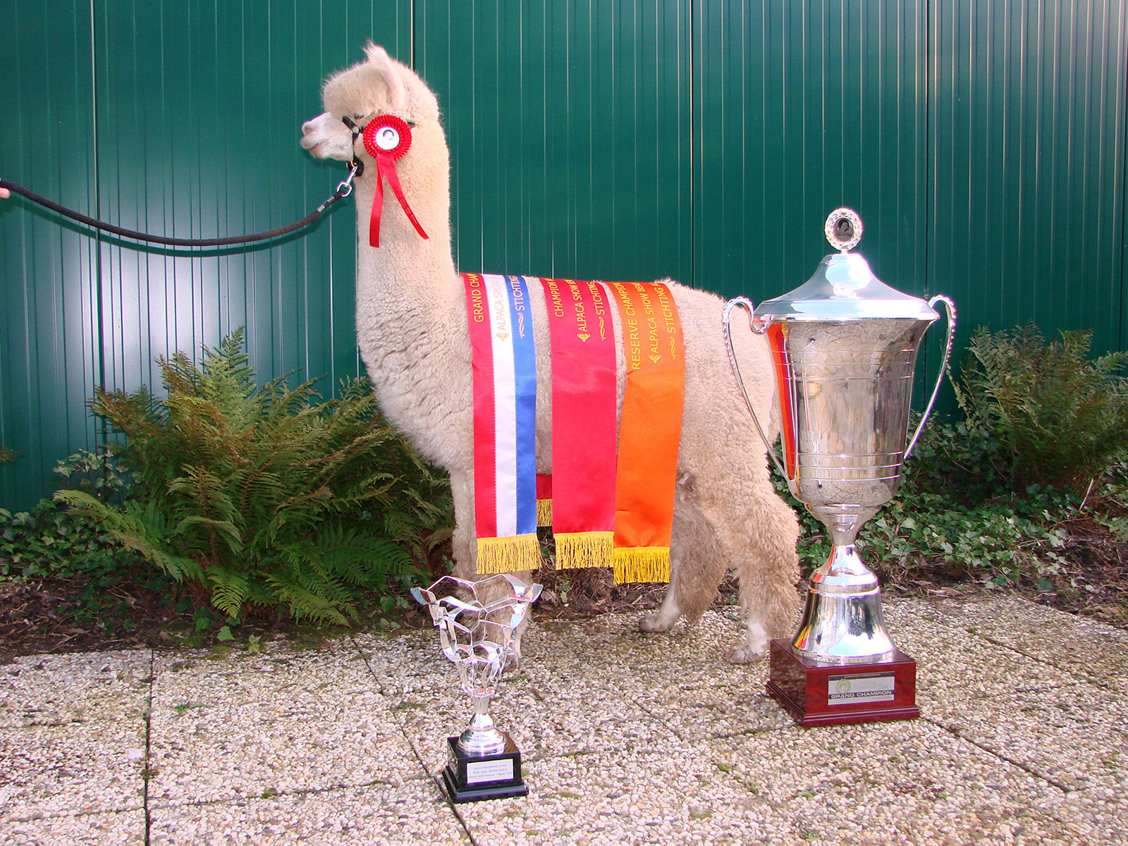 Alpaca-World-Brielle fokkerij raszuivere Alpaca's biozuiger alpacawandeling